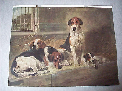 """Vintage Print Foxhounds J Emms 11"""" x 8.5"""" 1930s Dog Art As Seen For Framing"""
