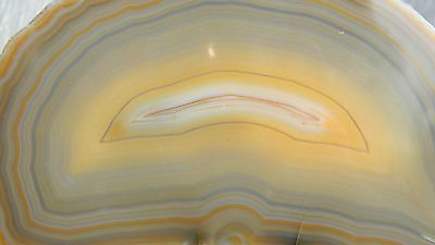 Polished Brazilian Agate Lapidary Rough