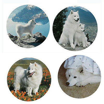 Samoyed Magnets 4 Cool Samoyeds for your Fridge or Collection-A Great Gift