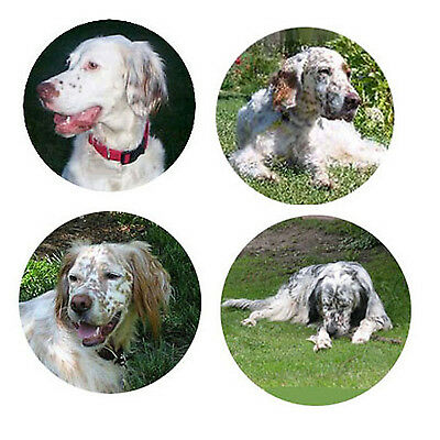 English Setter Magnets : 4 Cool English Setters for your Collection-A Great Gift