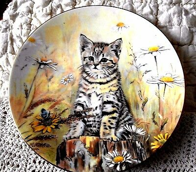 TIGER'S FANCY Kitten Classics Cat Plate Collection Royal Worcester