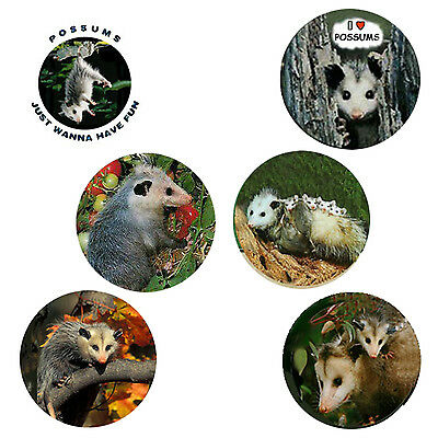 Possum Magnets: 6 Perky Possums Opossums  for your Fridge or Collection