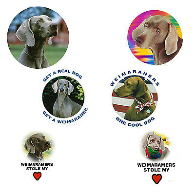 Weimaraner Magnets:   6 Cool Weimaraners for your Collection-A Great Gift