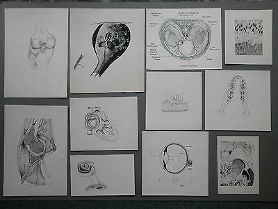11 X C1960's Original Pen & Ink Drawings For Medical Textbook? Parts Of Body