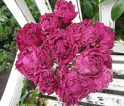 12  Dried Peony  Flowers Peonies Dark Pink Color  Wedding Bouquets Crafts