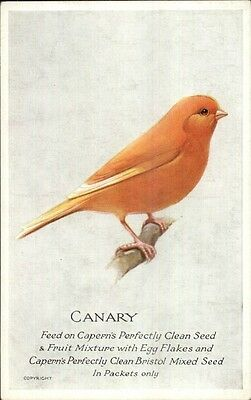 Capern's Bird Food Advertising c1910 Postcard CANARY #1 gfz