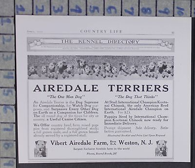 1920 Vibert Airedale Terrier Farm Dog Puppy Animal Weston N.j Vintage Ad  Cy24