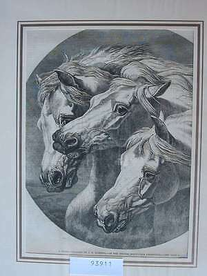 93911-Pferde-Horses-Reiten-Riding-A Study by Herring-T Holzstich-Wood engraving
