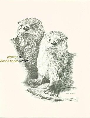 # 126 2 (TWO) OTTERS  wildlife  art print * pen & ink drawing by Jan Jellins