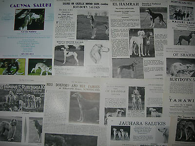 Saluki kennel breed clippings