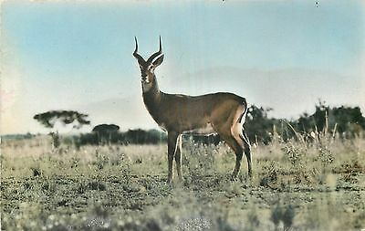 Cp Faune Africaine Antilope