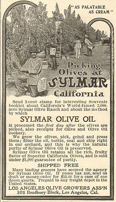 Antique 1902 SYLMAR California Olive Oil TREE GROVE Photograph Los Angeles Ad
