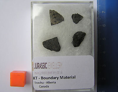 4 pieces Of Super Rare KT Boundary Material - From The Day The Dinos Died!