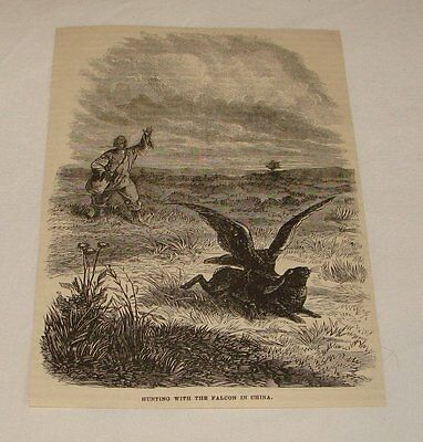 1877 magazine engraving ~ HUNTING WITH THE FALCON in China