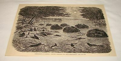 1885 magazine engraving ~ BEVEARS PREPARING FOR HIBERNATION