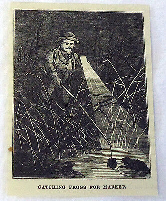 small 1882 magazine engraving ~ CATCHING FROGS FOR MARKET