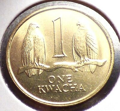 Zambia 1 Kwacha 1992, XF+ Coin w/ Taita Falcons, Birds of Prey, 1 Year Type KM38