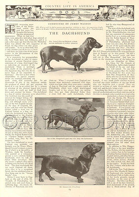 Antique 1915 Dachshund Dog Historical PHOTOGRAPH Champion AKC Show Photo Article