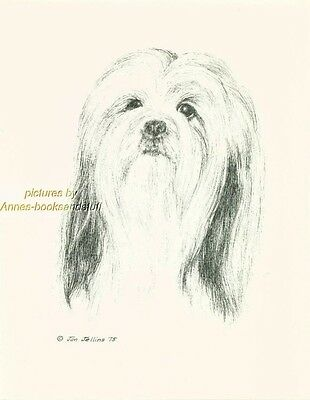 #43 LHASA APSO   porttrait *  dog art print * Pen and ink drawing * Jan Jellins
