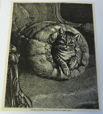 1883 magazine engraving ~ WINTER QUARTERS from Frank Paton- CAT IN A BLANKET