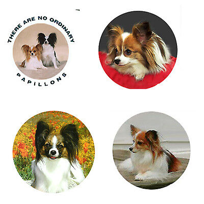 Papillon Magnets: 4 Cool Papillons for your Fridge or Collection-A Great Gift