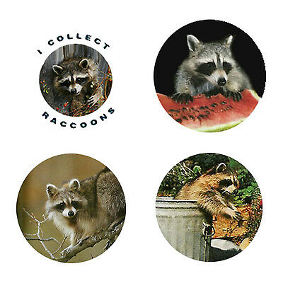 Raccoon Magnets-B:  4 Charming Raccoon Magnets for your home or Collection