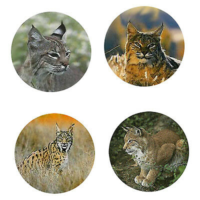 Lynx  Magnets : 4 Cool Lynx for your Fridge or Collection-A Great Gift