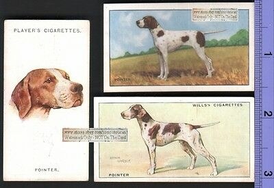 Pointer Dogs 3 Different 75+ Y/O Ad Trade Cards