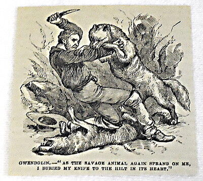small 1882 magazine engraving ~ WOLVES VS. MAN W/ KNIFE