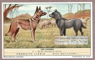 German Shepherd and Bouvier Dog  50+ Y/O Trade Advertising Card