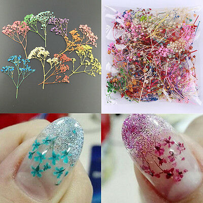10PC Mixed Color 3D Real Dried Babysbreath Flower Decor For UV Gel Nail Art Tips