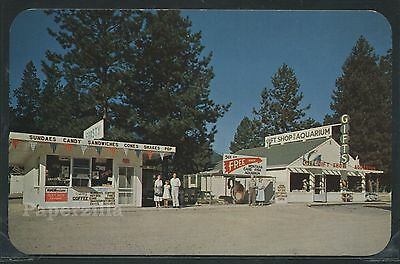 MT St. Regis RPPC 1950's BROWN'S FROSTY DRIVE-IN & GIFT SHOP Roadside Attraction