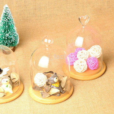 Table Display Glass Cloche Bell Micro Landscape Dried Flower Vase Dome Cover US
