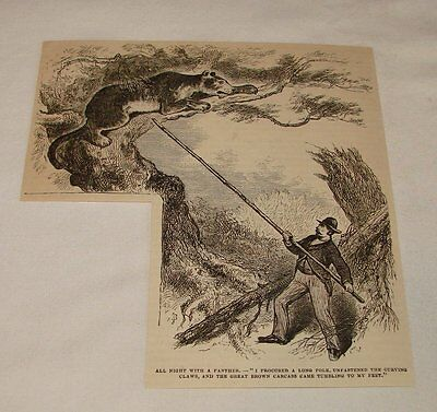 1879 magazine engraving ~ REMOVING DEAD PANTHER FROM TREE