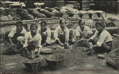 Colombo Ceylon Native Women Plumbago Curing Agriculture c1910 Postcard