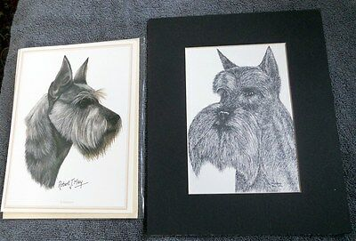 Schnauzer Art Prints Tony Ryals Robert T Mays Card & Matted