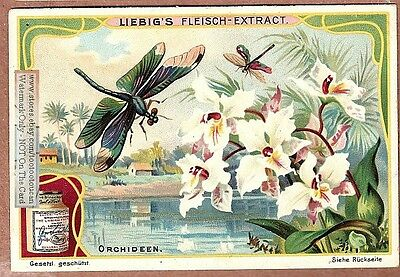 Dragonfly In White Orchid Flower Art c1907 Trade Ad Card