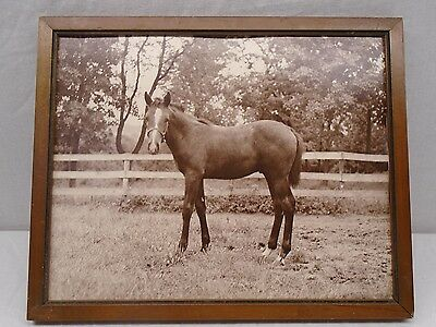 Beautiful Black and White Horse Picture in Wood Frame