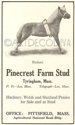 Antique Pinecrest Farm Stud WELSH Shetland PONY Hackney Tyringham MA Horse Ad