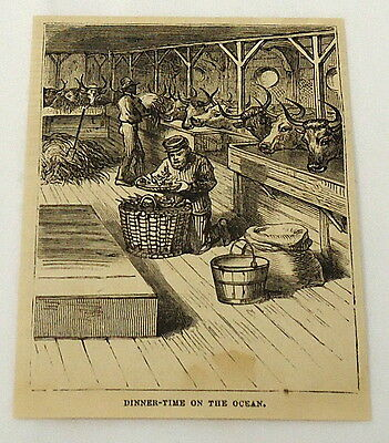1881 magazine engraving ~ MEN FEED CATTLE ON A BOAT