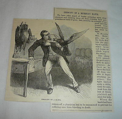 1879 article with engraving ~ FEROCITY OF A MICHIGAN HAWK