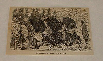 1879 magazine engraving ~ HOP-PICKERS AT WORK IN THE RAIN
