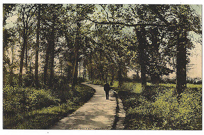 CALNE The Drive, Old Postcard by Tomkins & Barrett, Unused