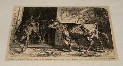1876 magazine engraving ~ THE PRIDE OF A COW