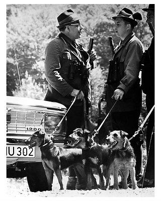 1968 NSU Audi And Hunting Terrier Dog ORIGINAL Factory Photo oua9009