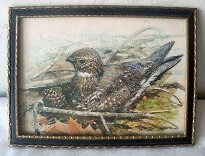 "Vintage Frame With WHIPPOORWILL Bird Print Under Glass Frame 7.75"" x 5.75"""
