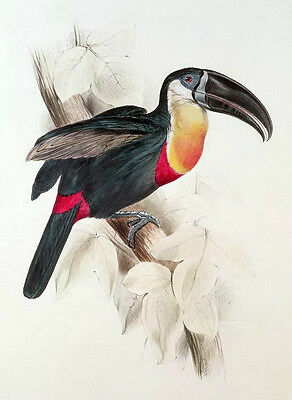 Art Oil painting birds with big mouth toucan on branch - Very nice Hand painted