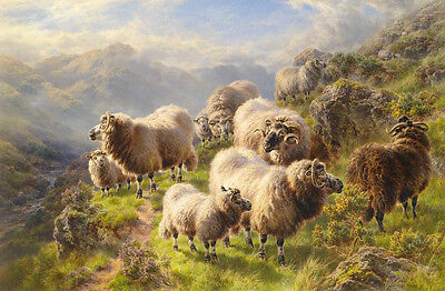 Art Oil painting nice animals a group of sheep eating grass on the hill canvas