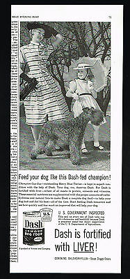 1954 Kerry Blue Terrier Dog Champion Gus Gus Dash Dog Food Vintage Print Ad