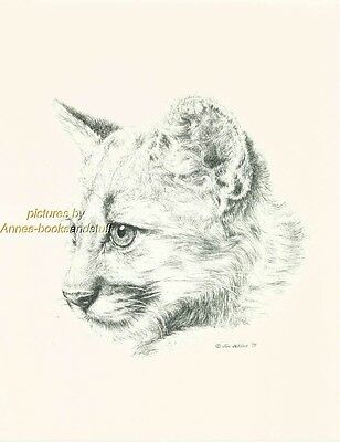 #107 COUGAR CUB  * wildlife art print * pen & ink drawing by Jan Jellins